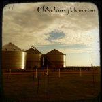 Not So Wordless Wednesday: DixieMaze Farms