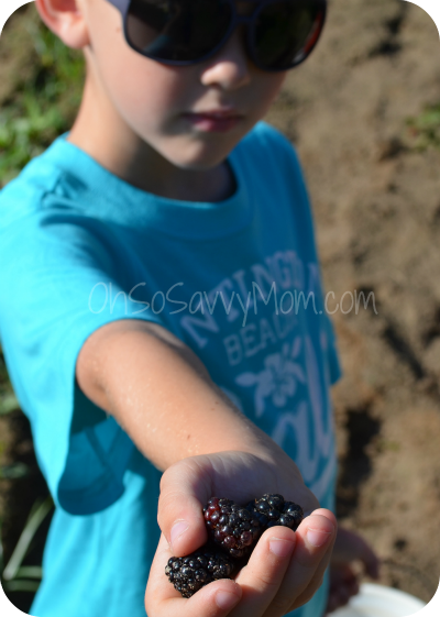 Big Brother with blackberries