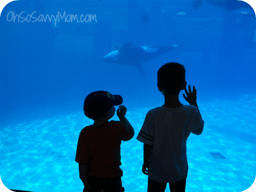 boys at Sea World