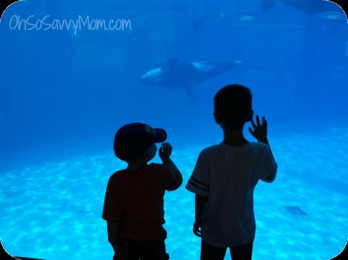 boys at Sea World