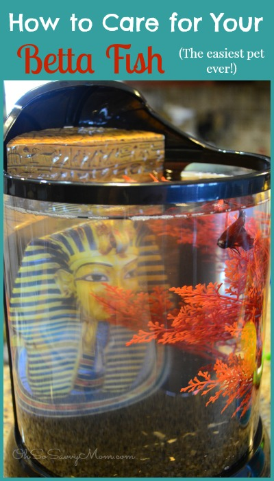 We got a pet national geographic fish tank review for How to care for a betta fish