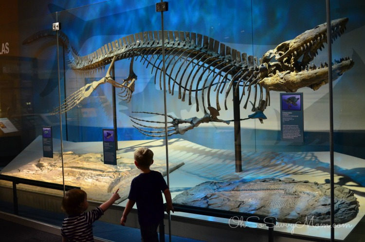 40% OFF Perot Museum of Nature and Science Black Friday 40% off Get instant savings with 11 valid Perot Museum of Nature and Science coupon codes & discounts in Nov. 15% Off The Purchase Of A Perot Museum Membership.