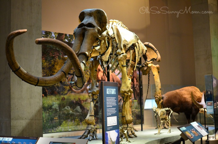 Perot Museum dinosaur exhibit