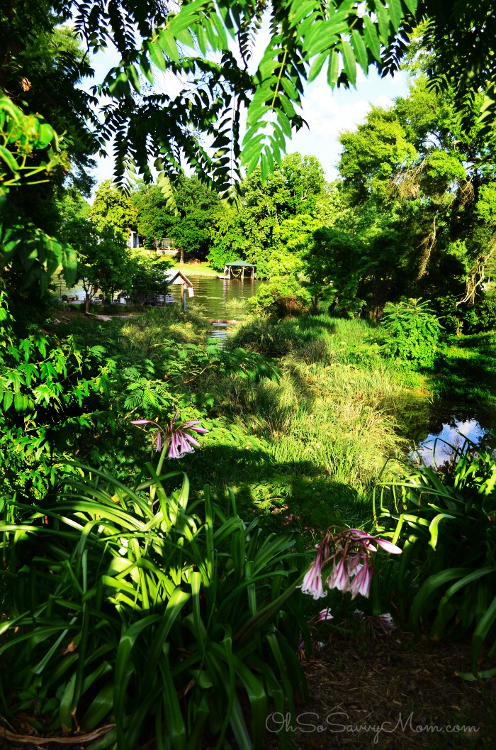 Natchitoches Louisiana Verdant beauty