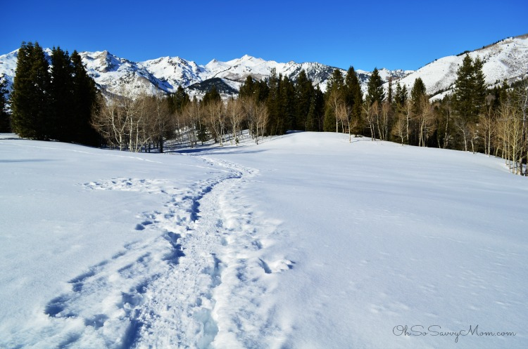 Snowshoeing in Utah County American Fork Canyon Tibble Fork