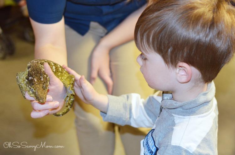 Natural History Museum of Utah Geckos Live