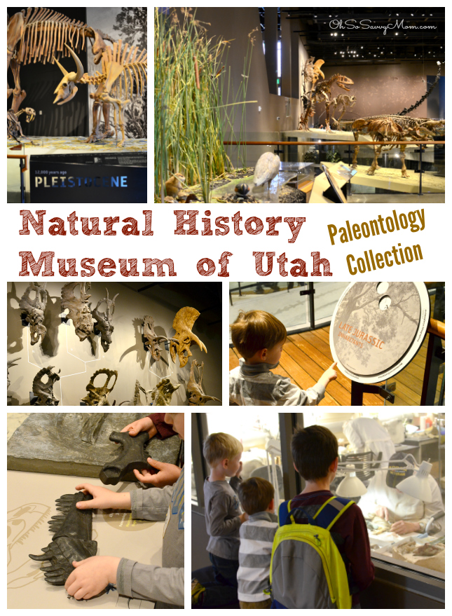 Natural History Museum of Utah Paleontology Collection